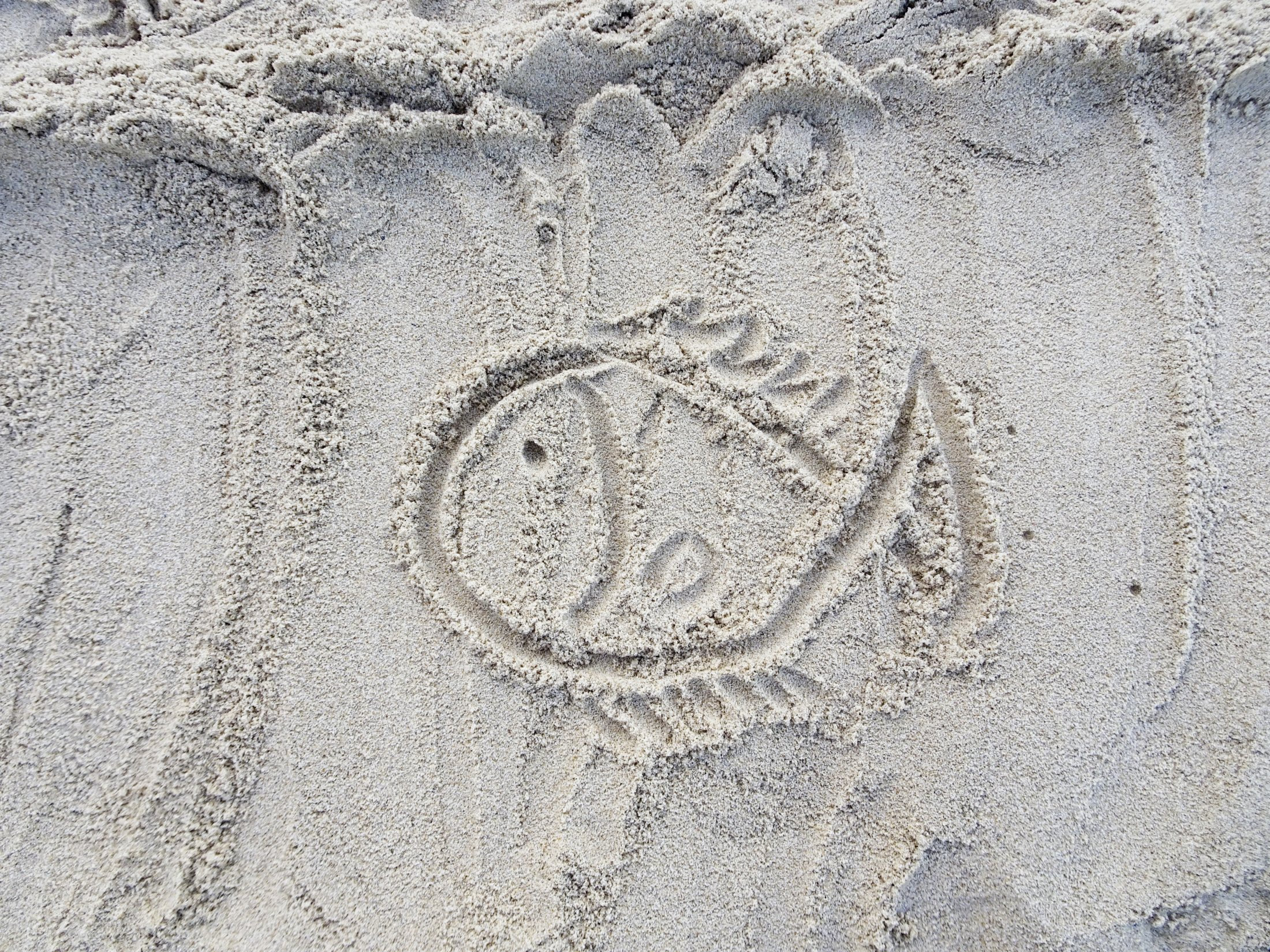 Drawing of marine life in the sand