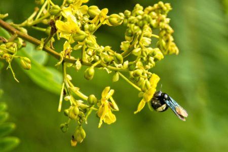 Bee or bumblebee